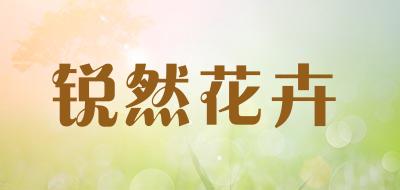 锐然花卉芦荟盆栽
