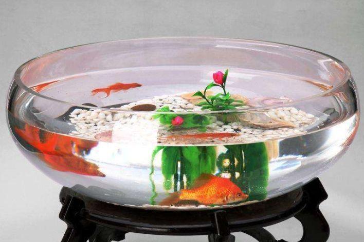 【鱼缸知识百科】鱼缸的详细分类大全-2