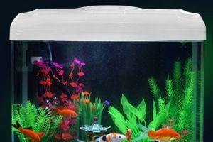 养鱼新手如何选择鱼缸 以下7点值得借鉴-1
